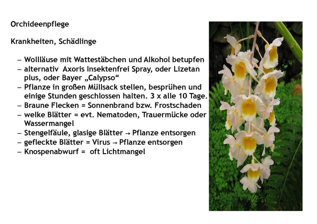 obst und gartenbauverein bad w rishofen types orchideenpflege. Black Bedroom Furniture Sets. Home Design Ideas